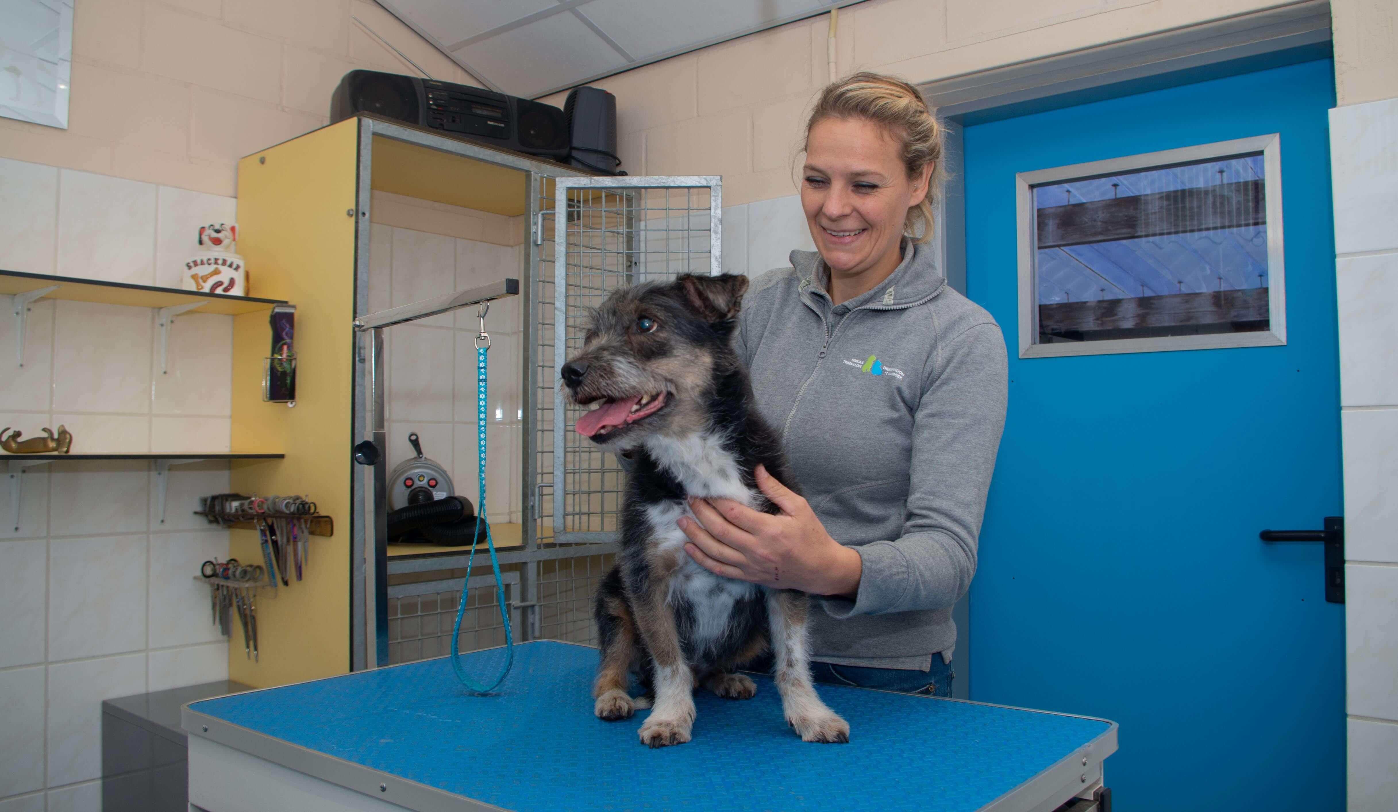 Hondje die klaar gemaakt word voor behandeling.
