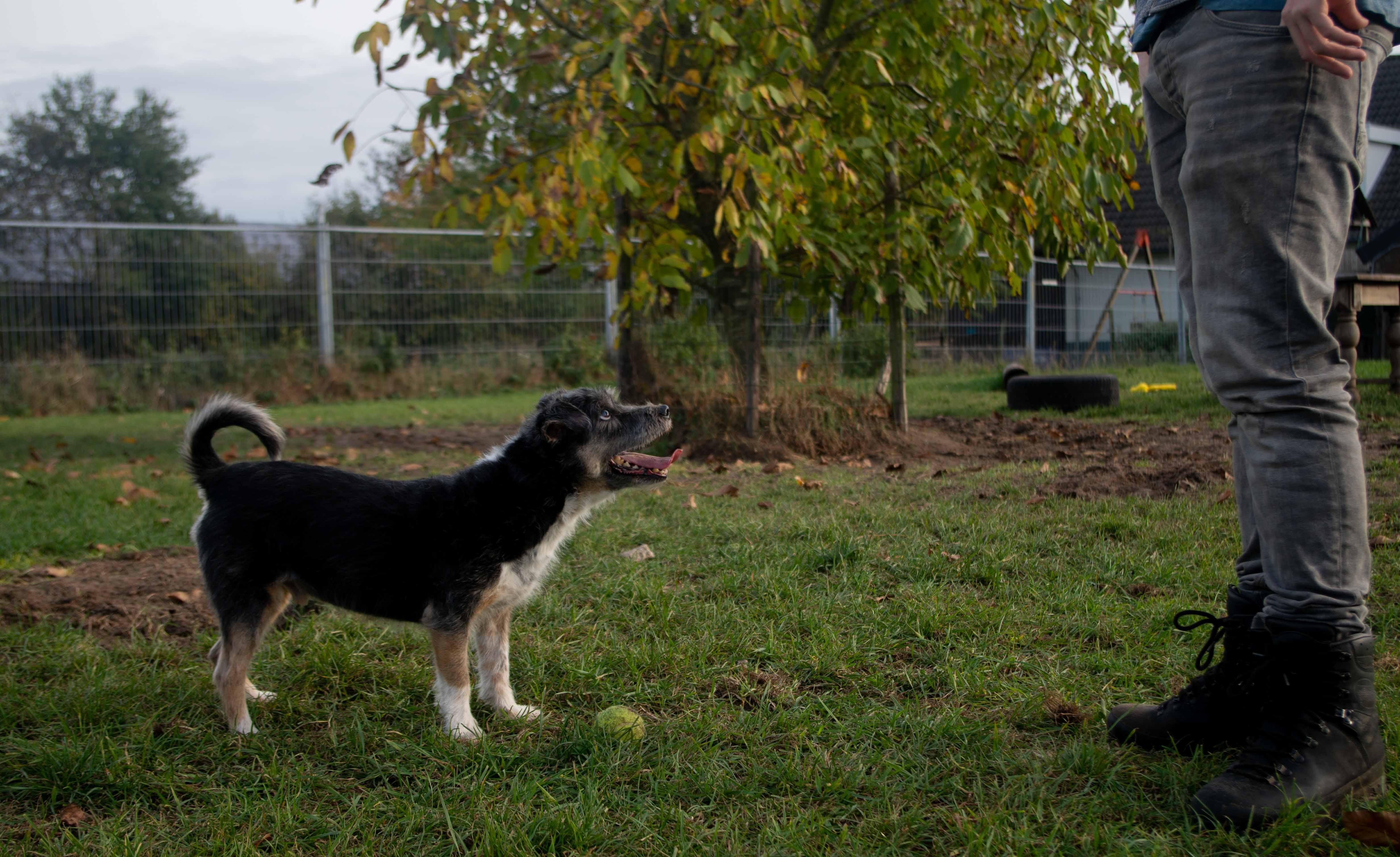 Een hond met een tennisbal