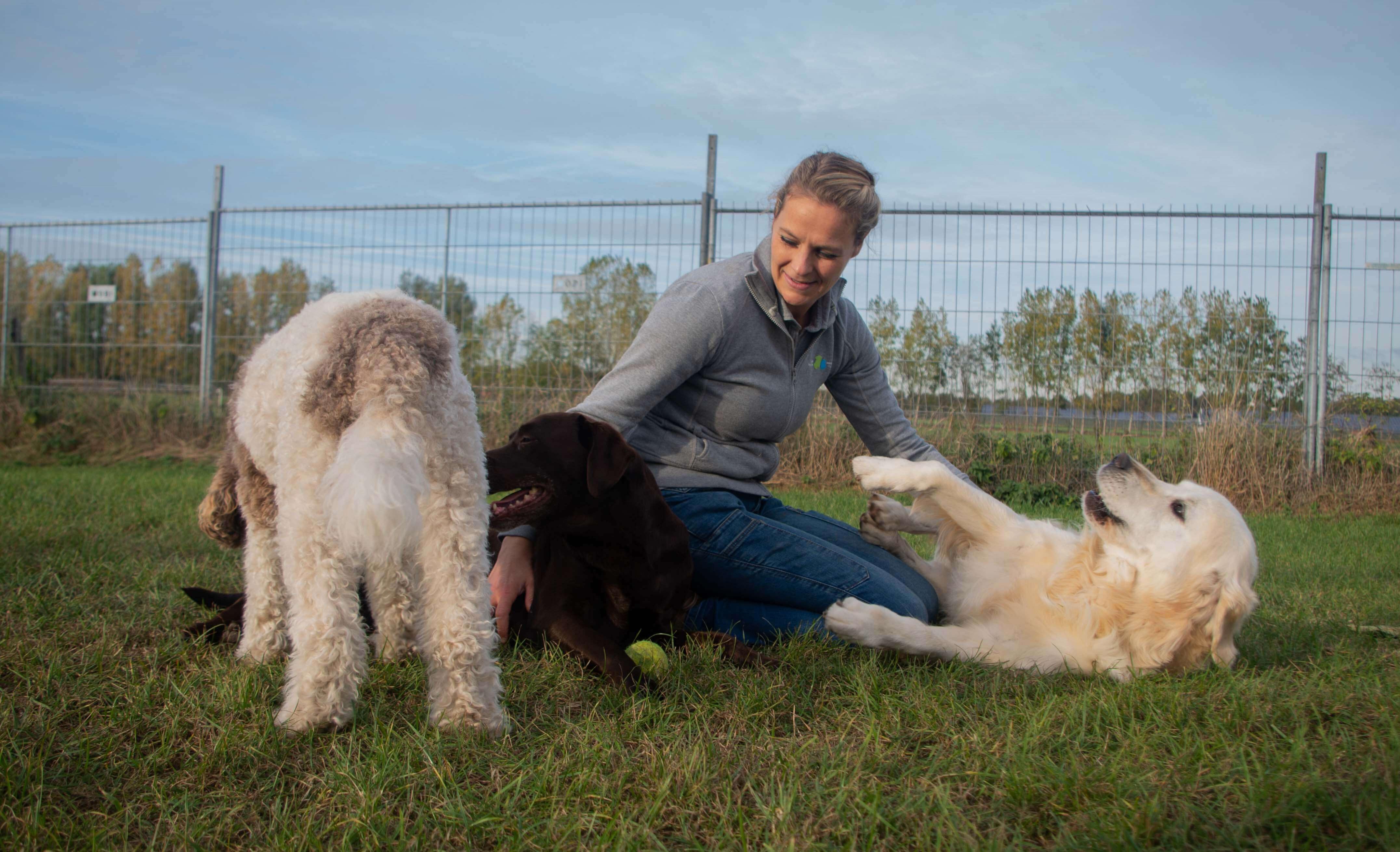 Vrouw die met honden speelt